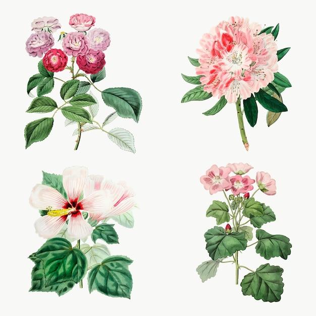 Conjunto botânico vintage de flores de mão drvector