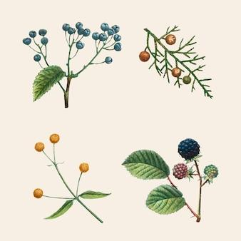Conjunto botânico vintage de ilustrações desenhadas à mão