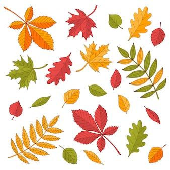Conjunto brilhante de folhas de outono