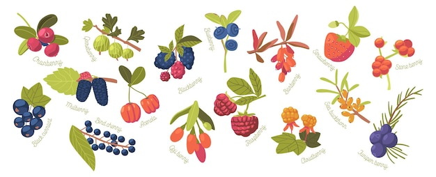 Conjunto cloudberry, strawberry, cranberry e raspberry com stone berry, acerola e goji. blackberry, juniper berry, black currant e blueberry com mulberry e groselha. ilustração em vetor de desenho animado
