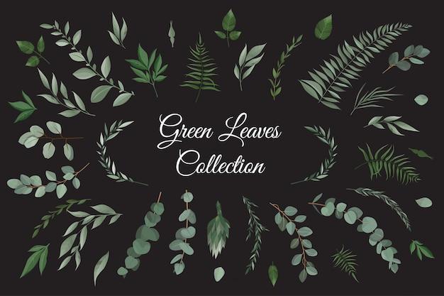 Conjunto coleção de ervas de folhas verdes em estilo aquarela.