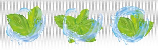 Conjunto, coleção de folhas de hortelã verdes com respingos de água azul.