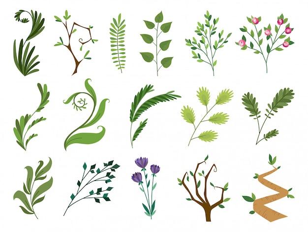 Conjunto coleção de samambaia floresta verde, vegetação de eucalipto verde tropical