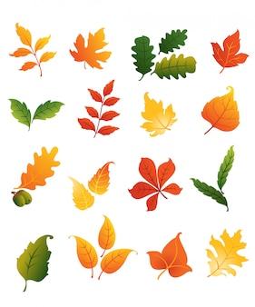 Conjunto colorido de folhas outonais