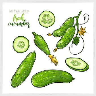 Conjunto colorido de suculentos e saborosos pepinos inteiros e fatiados com folhas. mão-extraídas ilustração com mão lettering manchete.