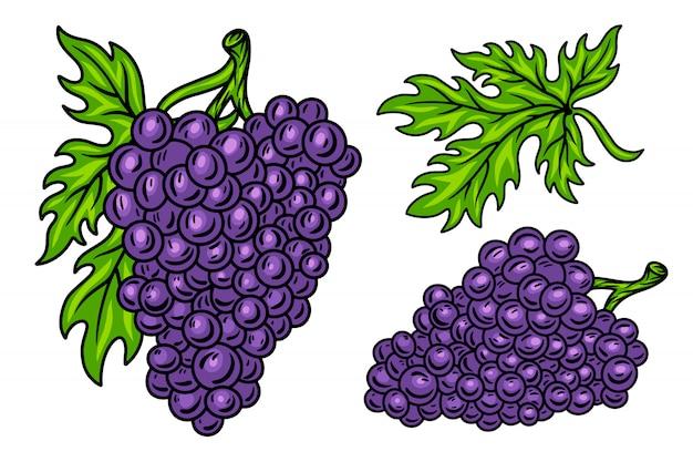 Conjunto colorido de videira de cacho de uva retro vintage com folhas