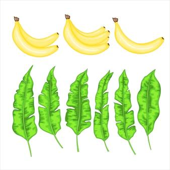 Conjunto com bananas e folhas de bananeira
