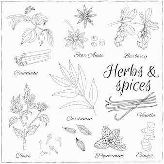 Conjunto com ervas e especiarias.
