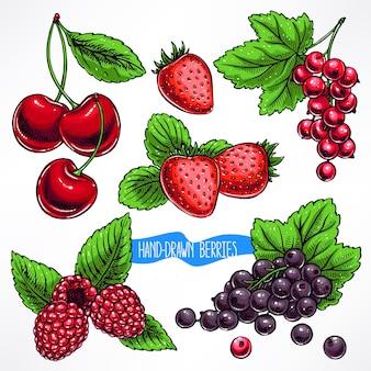Conjunto com folhas e frutos maduros diferentes. ilustração desenhada à mão