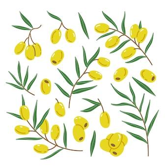 Conjunto com folhas e galhos de azeitonas verdes em um estilo simples e fofo de desenho animado