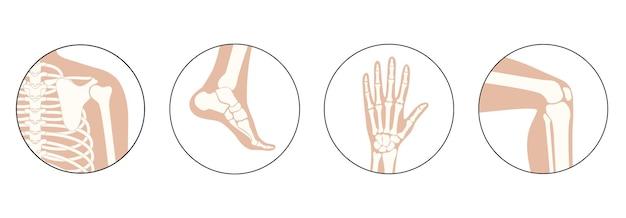 Conjunto com ícones de ombro, joelho, tornozelo e pulso humanos.
