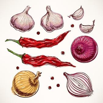 Conjunto com legumes e especiarias. ilustração desenhada à mão