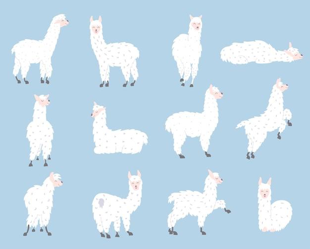 Conjunto com lhamas bonitos. vetor de lhama bebê de desenho de contorno isolado. guanaco, alpaca, vicunha.