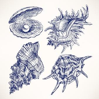 Conjunto com quatro belas conchas. ilustração desenhada à mão
