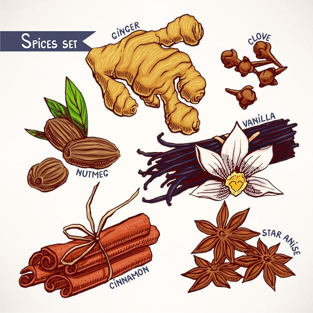 Conjunto com várias especiarias desenhadas à mão. anis estrelado, gengibre e noz-moscada. ilustração desenhada à mão