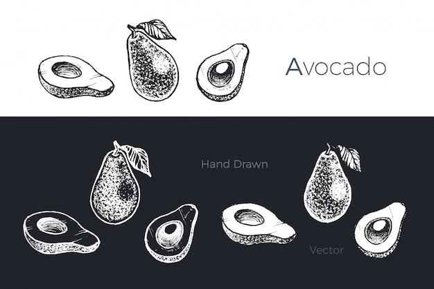 Conjunto de abacate mão desenhada