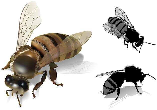 Conjunto de abelhas apis melifea