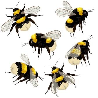 Conjunto de abelhas isoladas