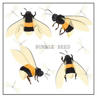 Conjunto de abelhas