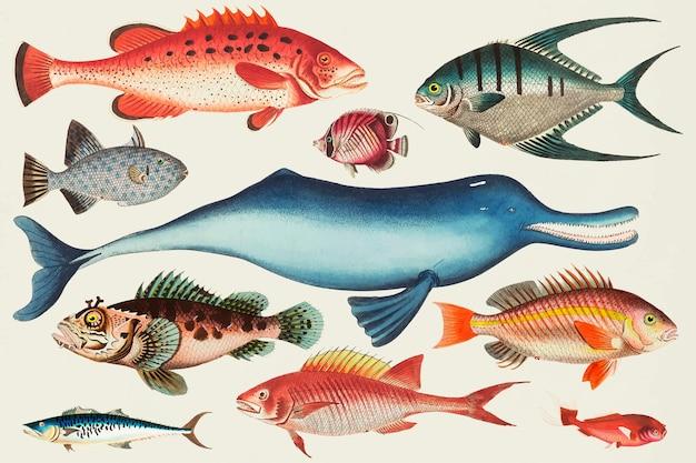 Conjunto de adesivos coloridos de peixes vintage Vetor grátis