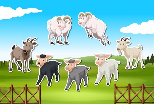 Conjunto de adesivos de ovelhas e cabras
