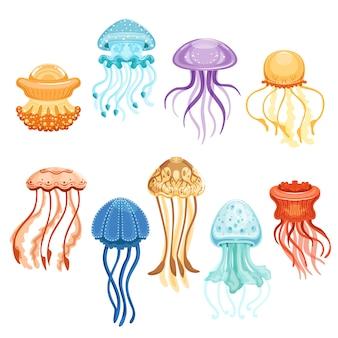 Conjunto de águas-vivas coloridas, ilustrações em aquarela de criaturas marinhas nadando em um fundo branco