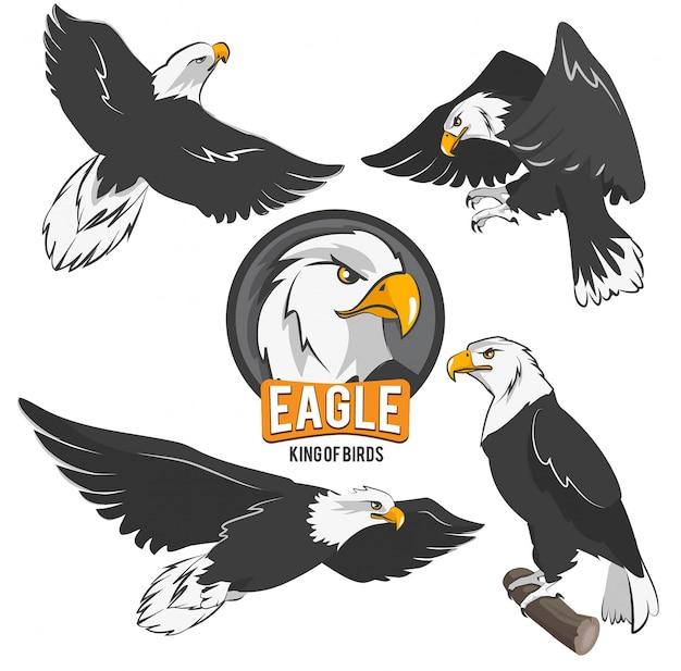 Conjunto de águias dos desenhos animados em poses de ação diferentes