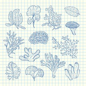 Conjunto de algas desenhadas à mão