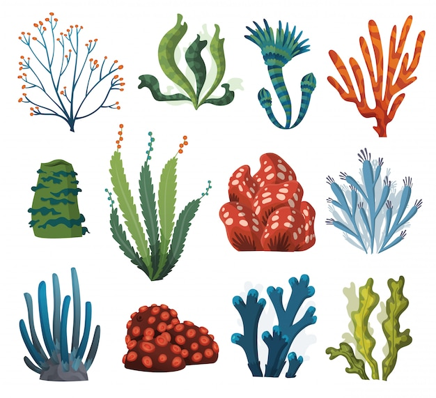 Conjunto de algas em aquarela e corais isolados no fundo branco. algas subaquáticas. coleção de plantas de aquário. flora subaquática