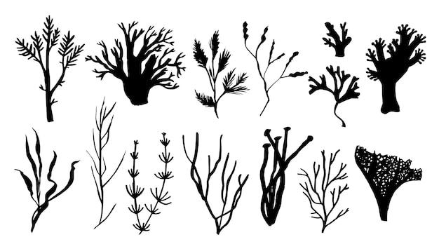 Conjunto de algas marinhas e algas. fauna subaquática com diferentes silhuetas. ilustração desenhada à mão negra.