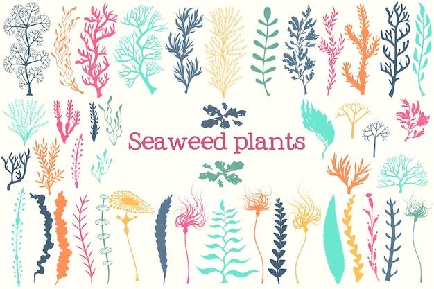 Conjunto de algas marinhas e aquários