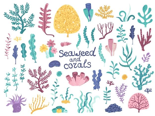 Conjunto de algas vetoriais e corais