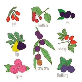 Conjunto de alimentos botânicos coloridos desenhados à mão