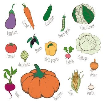 Conjunto de alimentos ecológicos coloridos desenhados à mão