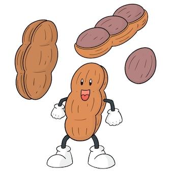 Conjunto de amendoim