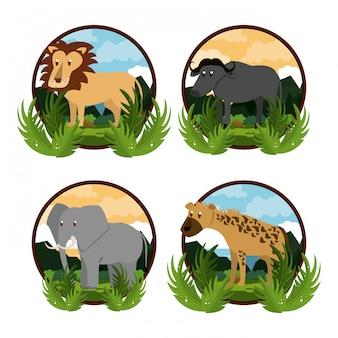 Conjunto de animais africanos selvagens