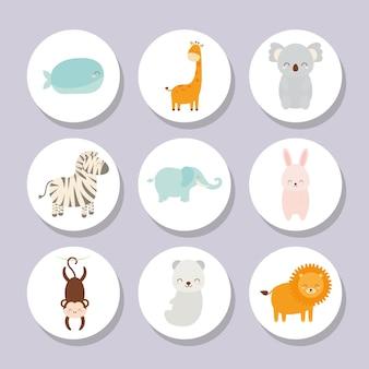 Conjunto de animais bebês