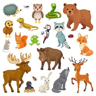 Conjunto de animais da floresta e pássaros.