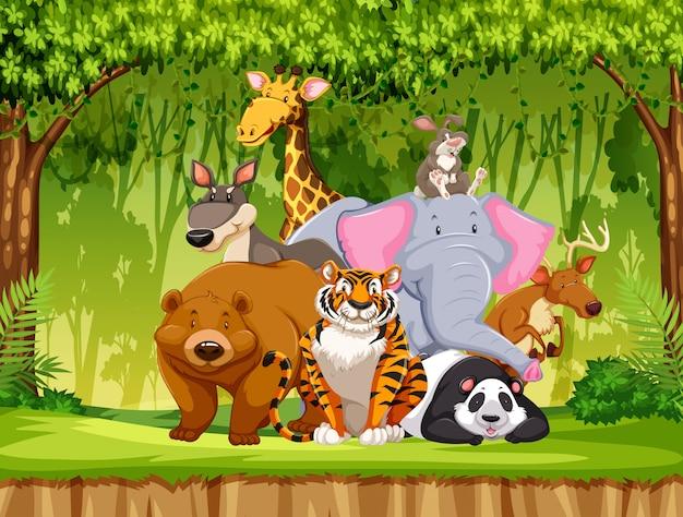 Conjunto de animais da vida selvagem