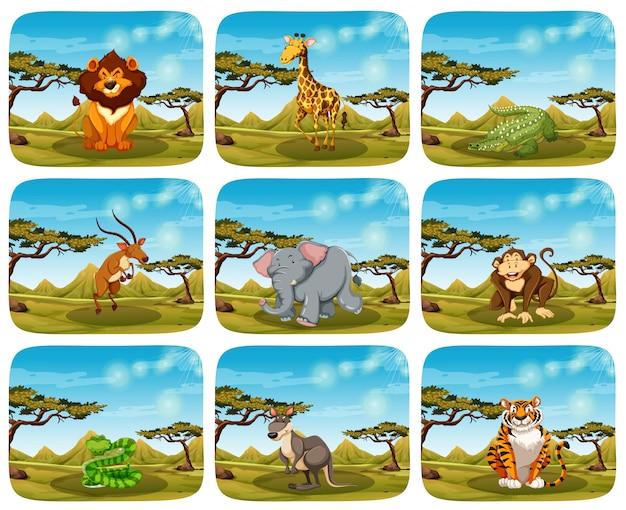 Conjunto de animais diferentes em cenas