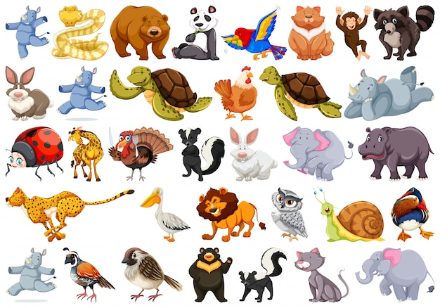 Conjunto de animais diferentes
