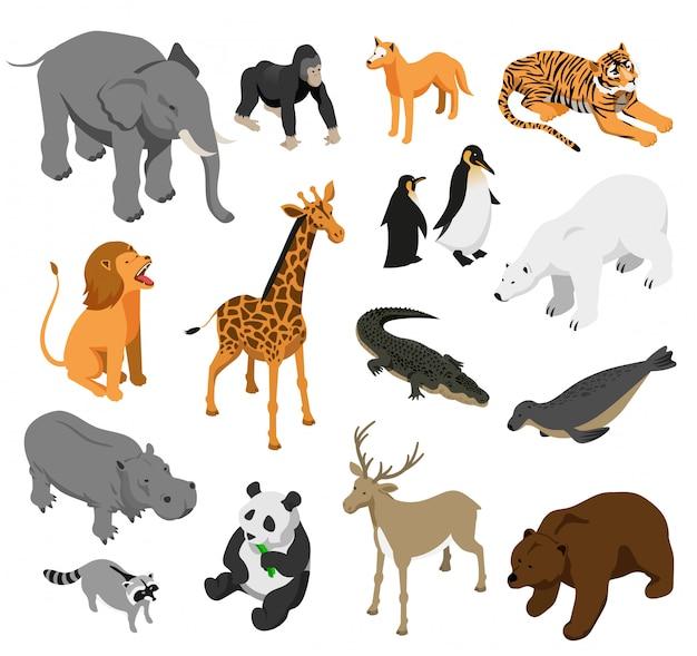 Conjunto de animais do zoológico herbívoro e predatório de ícones isométricos em branco isolado