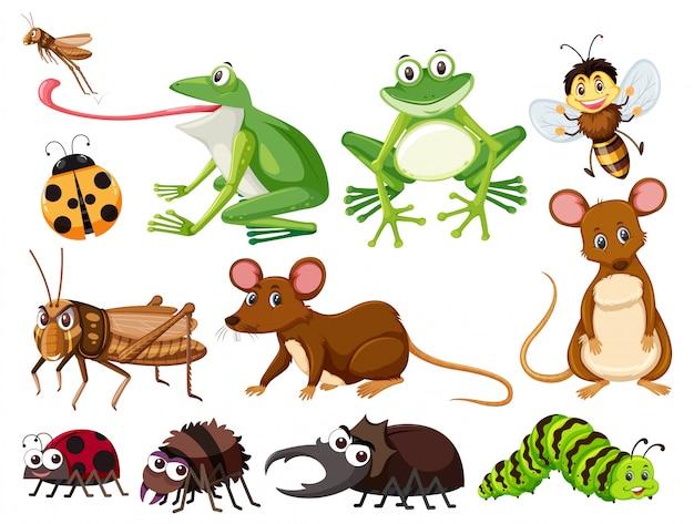 Conjunto de animais e insetos
