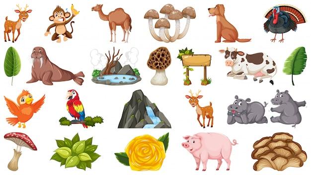 Conjunto de animais e plantas
