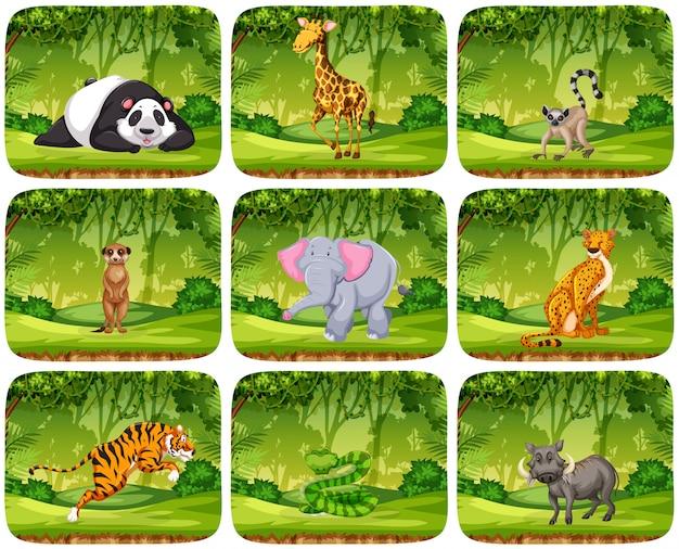Conjunto de animais em cenários de selva