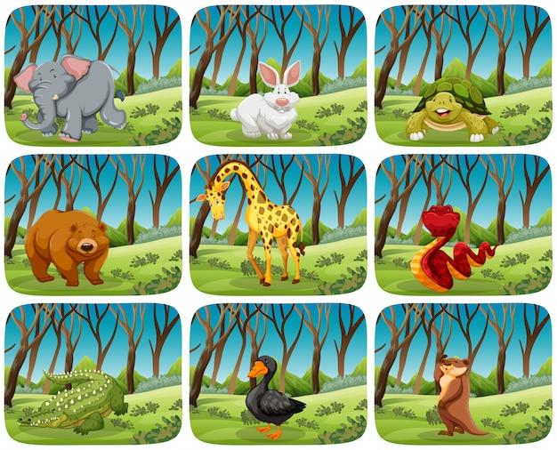 Conjunto de animais em cenas da natureza