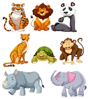Conjunto de animais fofos