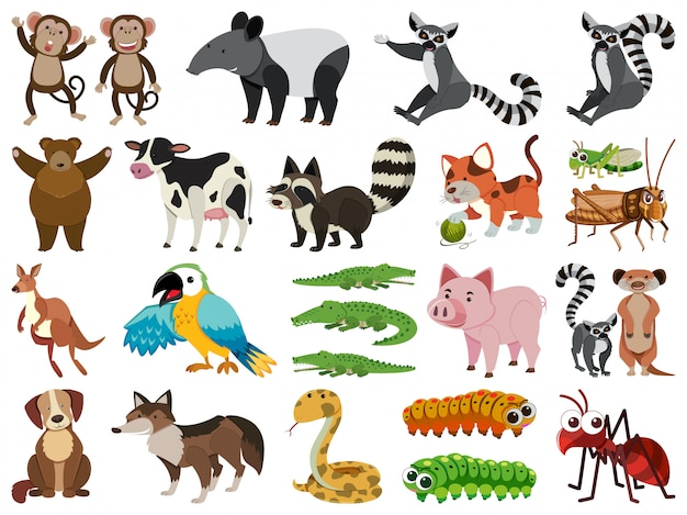 Conjunto de animais isolados