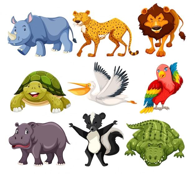 Conjunto de animais pack