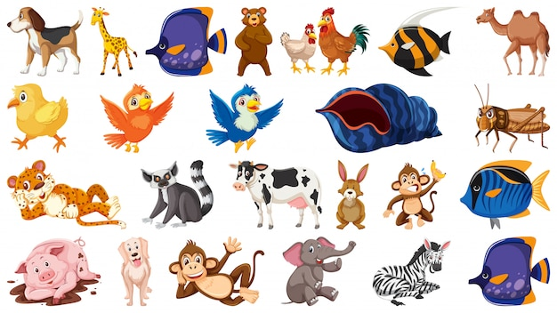 Conjunto de animais selvagens de tema isolado
